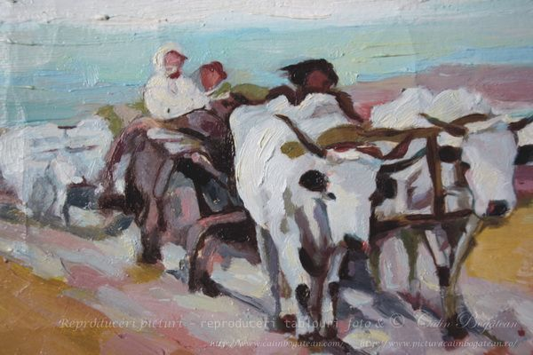 Car cu boi trecand un vad (2)