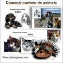 comenzi portrete de animale